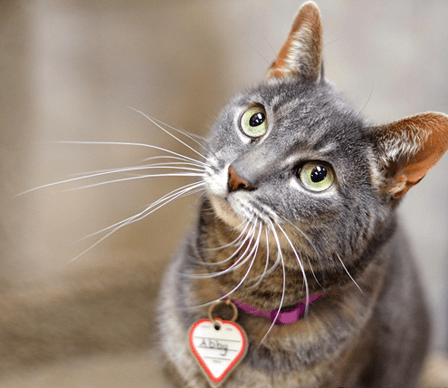 Animal Shelter and Pet Adoptions Connecticut | Protectors of Animals